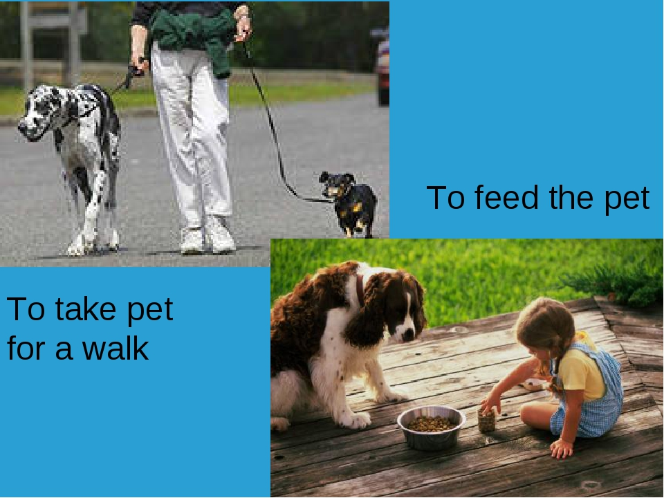 To take pet for a walk To feed the pet