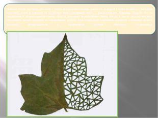 Листья очень хрупкие, поэтому с ними невероятно сложно работать и порой у ме