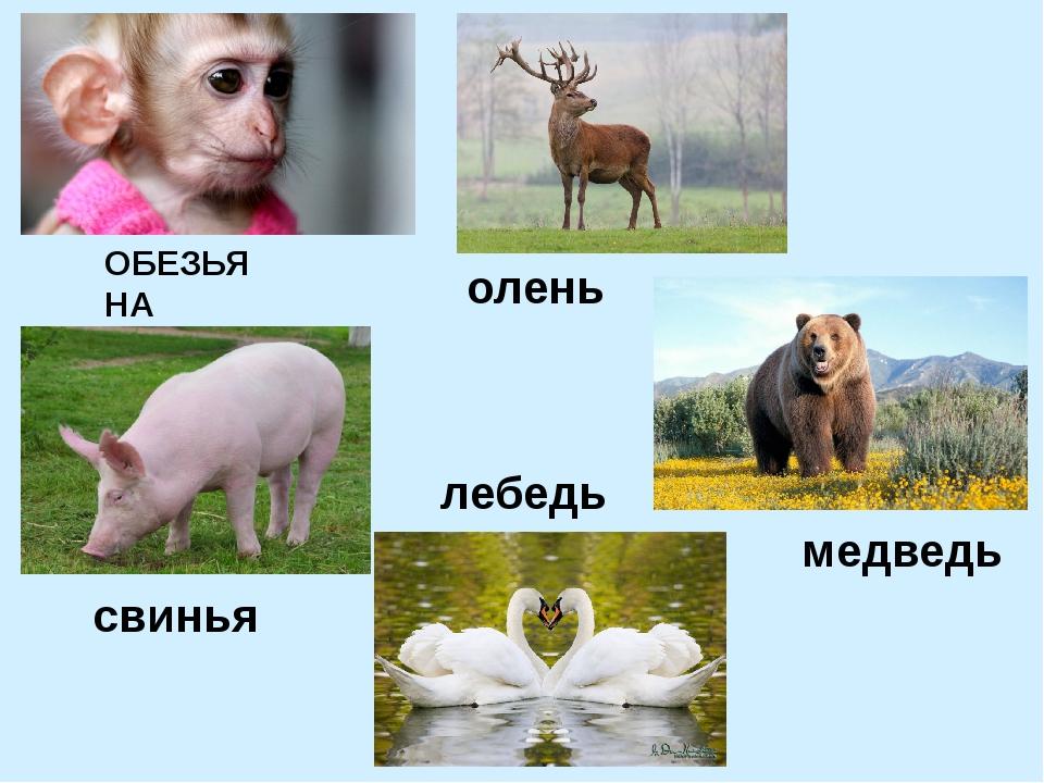 ОБЕЗЬЯНА медведь лебедь свинья олень