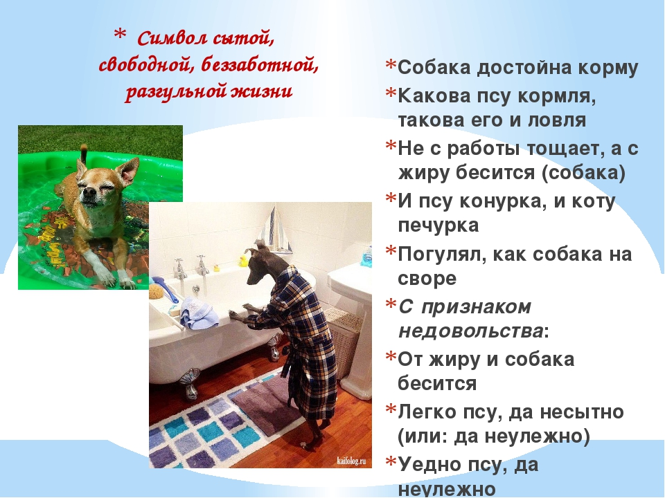 Символ сытой, свободной, беззаботной, разгульной жизни Собака достойна корму...