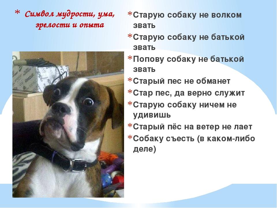 Символ мудрости, ума, зрелости и опыта Старую собаку не волком звать Старую с...