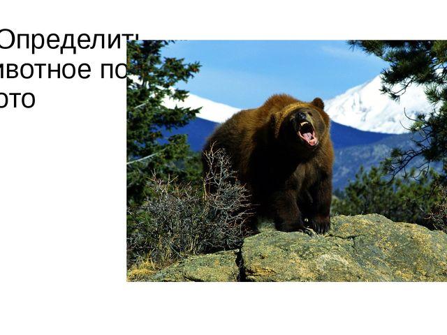 2.Определить животное по фото