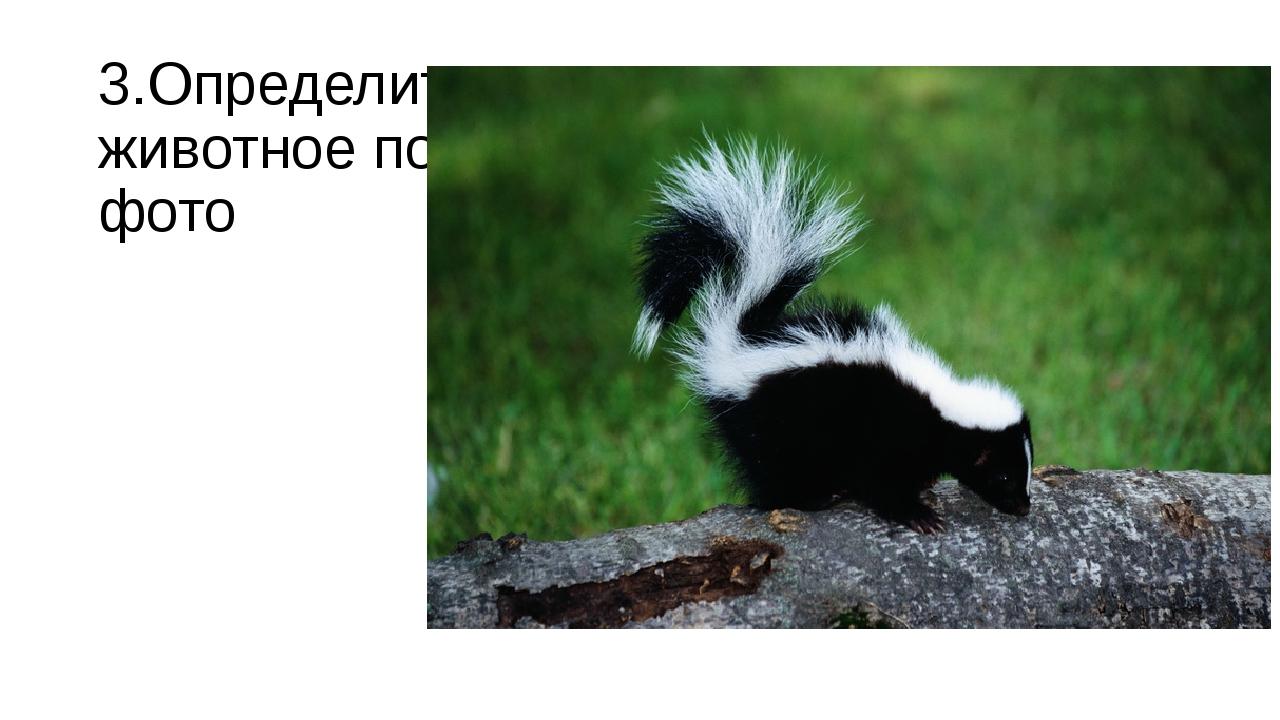 Узнать животное по фото