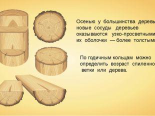 Осенью у большинства деревьев новые сосуды деревьев оказываются узко-просветн
