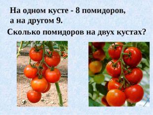 На одном кусте - 8 помидоров, а на другом 9. Сколько помидоров на двух кустах?
