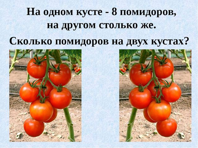 На одном кусте - 8 помидоров, на другом столько же. Сколько помидоров на двух...