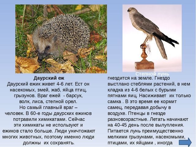 http://www.zooclub.ru/wild/hish/310.shtml-норка http://zooclub.ru/wild/nasek/...
