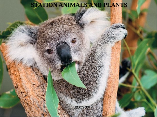 STATION ANIMALS AND PLANTS STATION 4