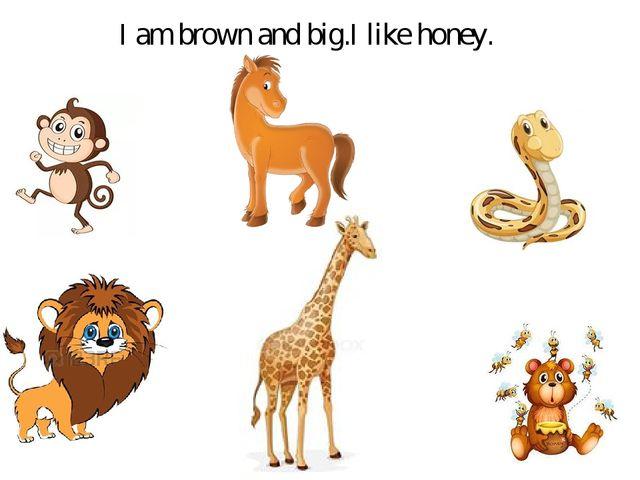 I am brown and big.I like honey.