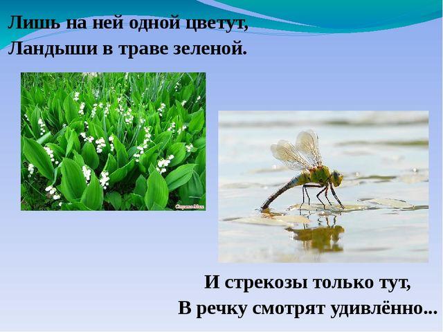 И стрекозы только тут, В речку смотрят удивлённо... Лишь на ней одной цветут,...