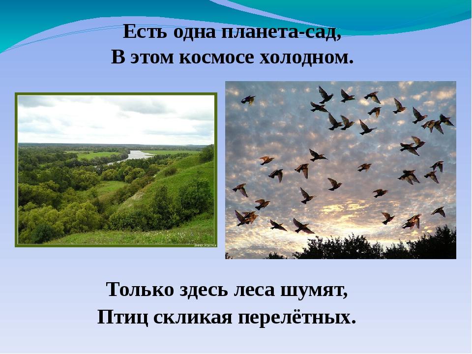 Только здесь леса шумят, Птиц скликая перелётных. Есть одна планета-сад, В эт...