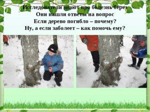 Исследователи знают про болезнь берез Они нашли ответы на вопрос Если дерево