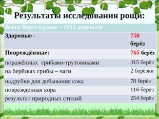 Результаты исследования рощи: Всего берёз в роще – 1515 деревьев Здоровые -