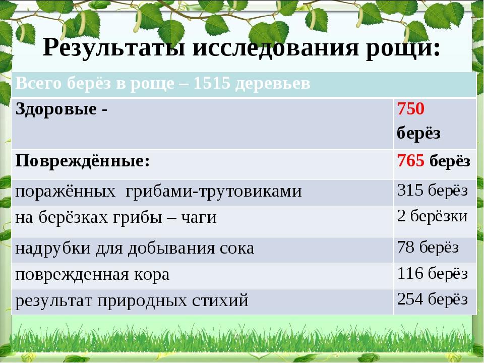 Результаты исследования рощи: Всего берёз в роще – 1515 деревьев Здоровые -...