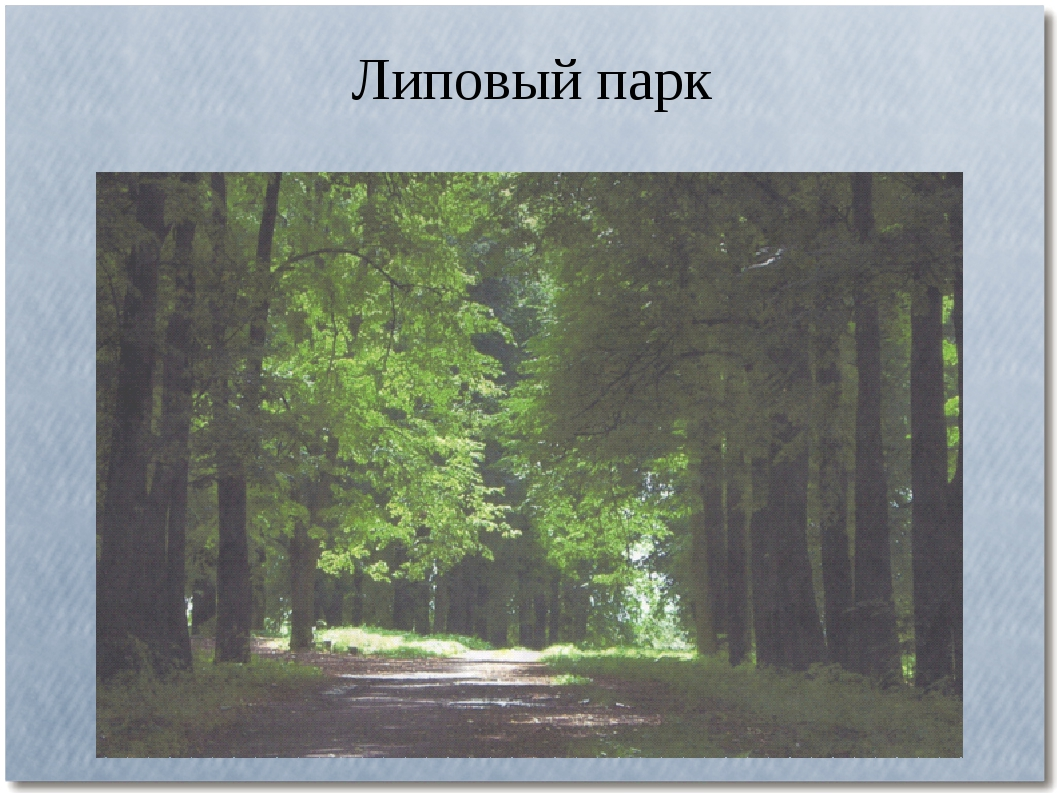 Липовый парк