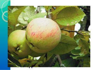 6) Решение задачи. Росли в Кощеевом саду золотые и серебряные яблоки. Всего