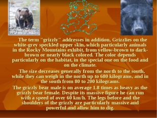 """The term """"grizzly"""" addresses in addition, Grizzlies on the white-grey speckl"""
