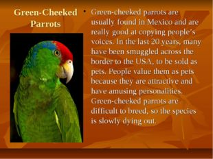 Green-Cheeked Parrots Green-cheeked parrots are usually found in Mexico and a