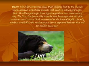 Bears, like other carnivores, trace their pedigree back to the miacids, smal