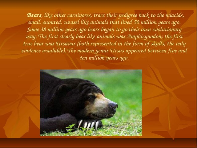 Bears, like other carnivores, trace their pedigree back to the miacids, smal...