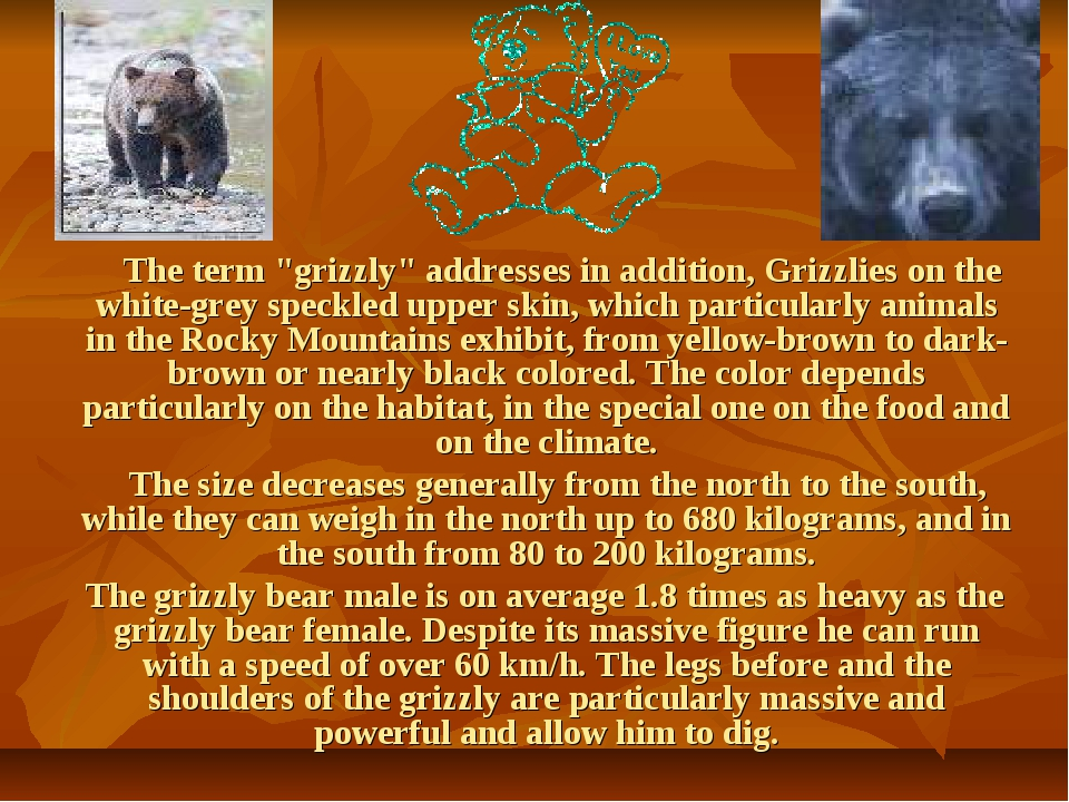 """The term """"grizzly"""" addresses in addition, Grizzlies on the white-grey speckl..."""