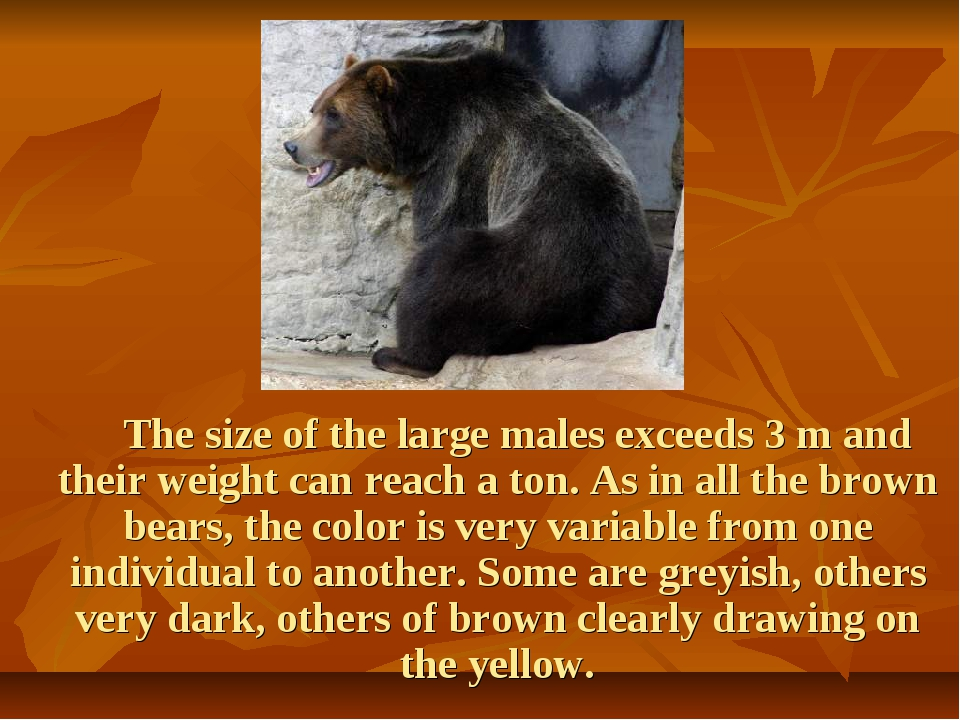 The size of the large males exceeds 3 m and their weight can reach a ton. As...