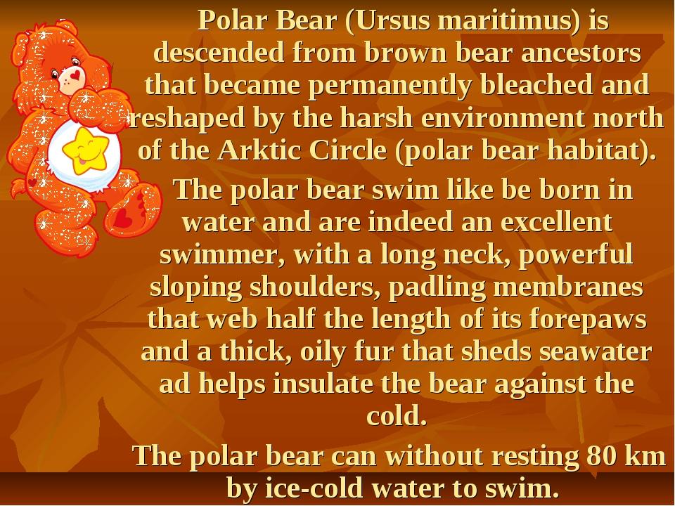 Polar Bear (Ursus maritimus) is descended from brown bear ancestors that bec...