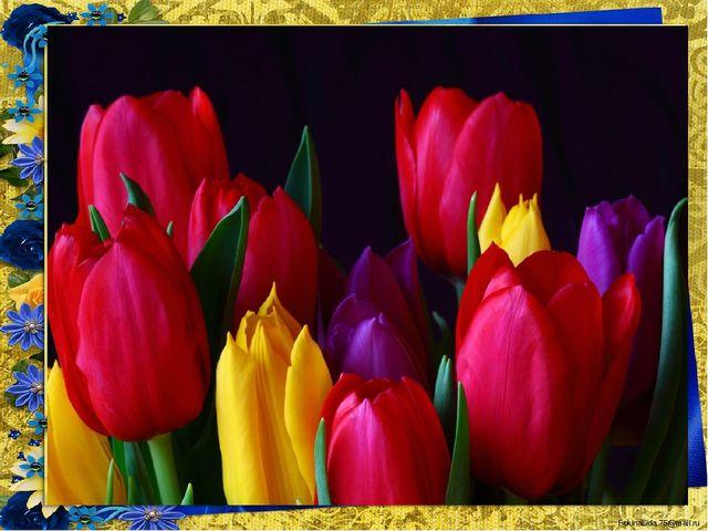 Замечательный цветок, Словно яркий огонек. Пышный, важный, словно пан, Нежный...