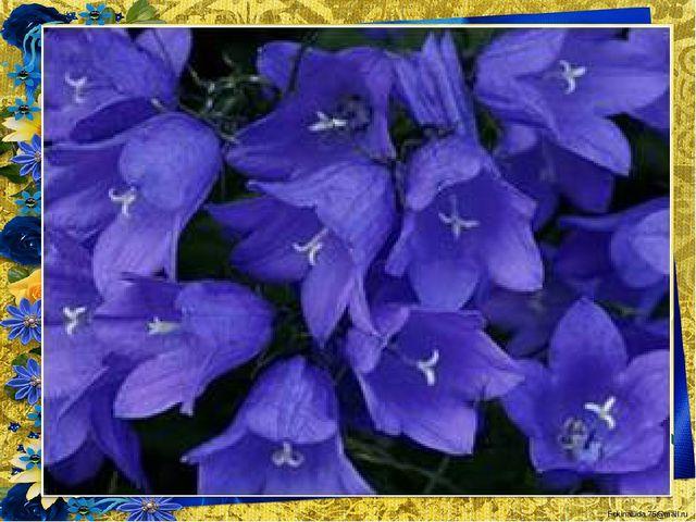 То фиолетовый, то голубой, Он на опушке встречался с тобой. Название ему очен...