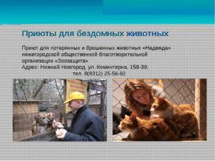 Приюты для бездомных животных Приют для потерянных и брошенных животных «Над