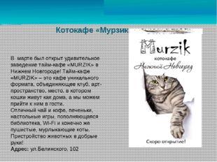 Котокафе «Мурзик» В марте был открыт удивительное заведение тайм-кафе «MURZIK