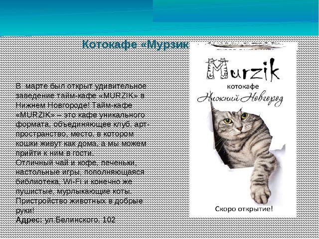 Котокафе «Мурзик» В марте был открыт удивительное заведение тайм-кафе «MURZIK...