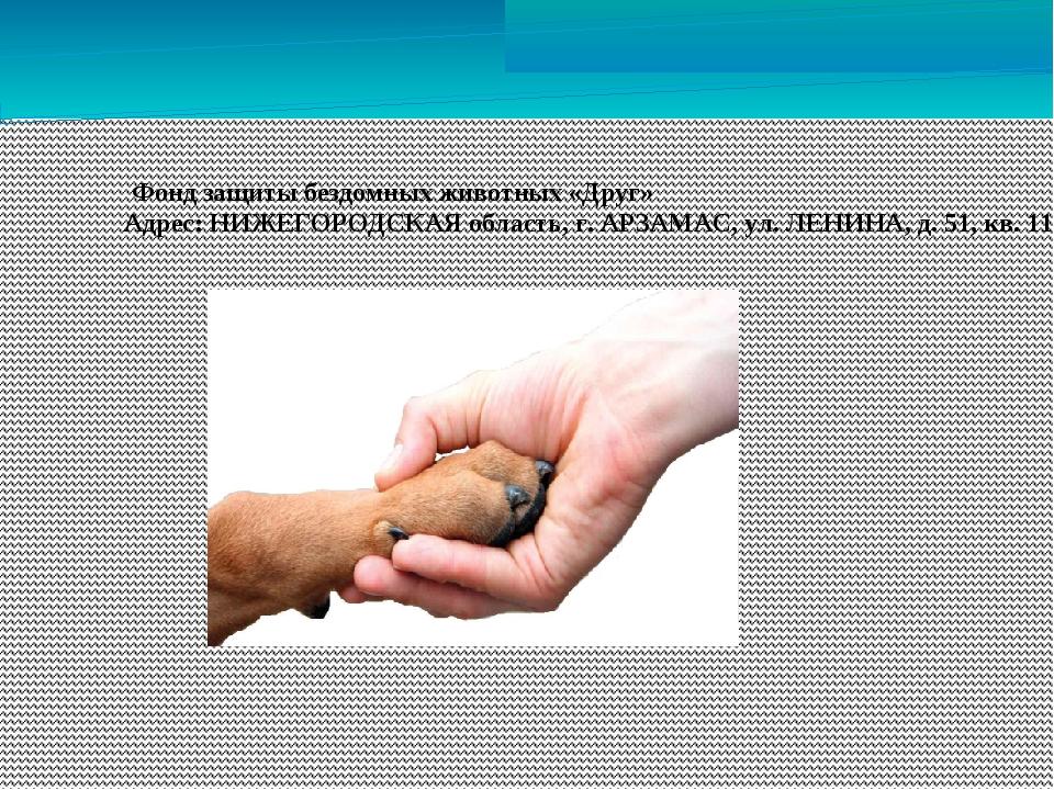 Фонд защиты бездомных животных «Друг» Адрес: НИЖЕГОРОДСКАЯ область, г. АРЗАМ...
