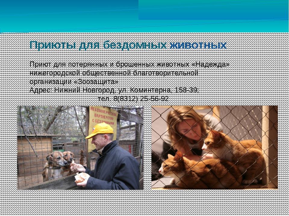 Приюты для бездомных животных Приют для потерянных и брошенных животных «Над...