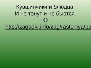 Кувшинчики и блюдца И не тонут и не бьются. ©http://zagadki.info/zag/rasteni