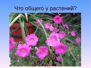 Что общего у растений?