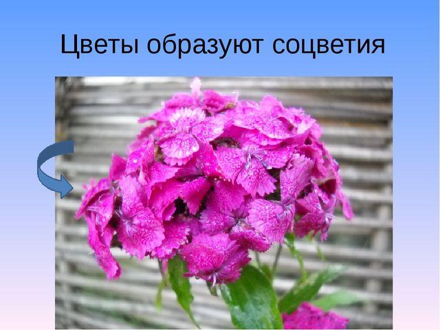 Цветы образуют соцветия