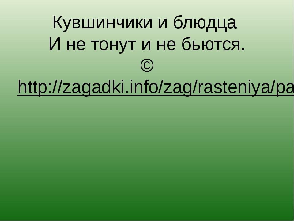 Кувшинчики и блюдца И не тонут и не бьются. ©http://zagadki.info/zag/rasteni...