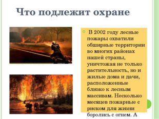 Что подлежит охране В 2002 году лесные пожары охватили обширные территории во
