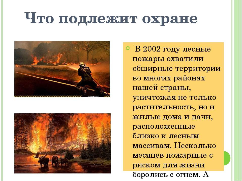 Что подлежит охране В 2002 году лесные пожары охватили обширные территории во...