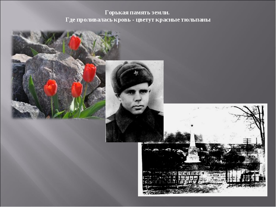 Горькая память земли. Где проливалась кровь - цветут красные тюльпаны