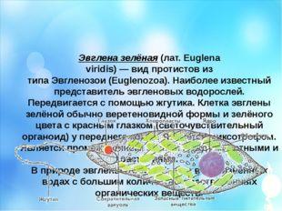 Эвглена зелёная(лат.Euglena viridis)—видпротистовиз типаЭвгленозои(Eu