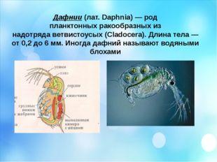 Дафнии(лат.Daphnia)— род планктонныхракообразныхиз надотрядаветвистоусы