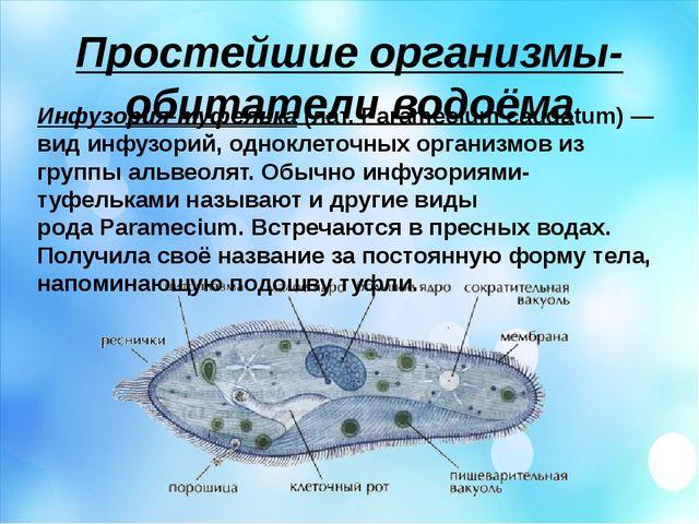 Простейшие организмы- обитатели водоёма Инфузория-туфелька(лат.Paramecium c...