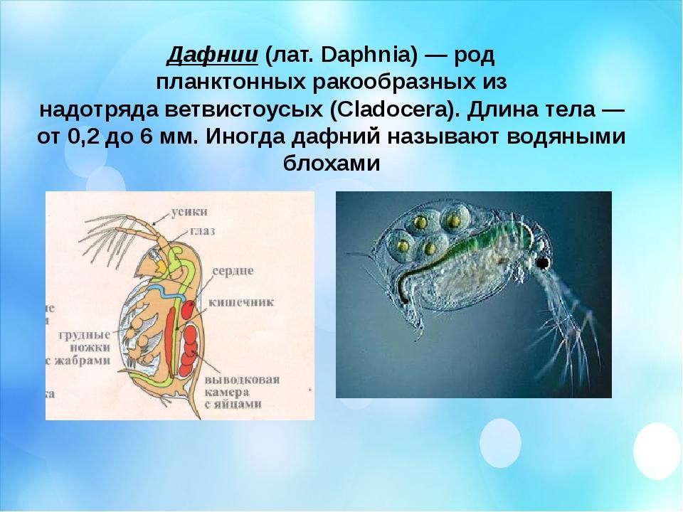 Дафнии(лат.Daphnia)— род планктонныхракообразныхиз надотрядаветвистоусы...