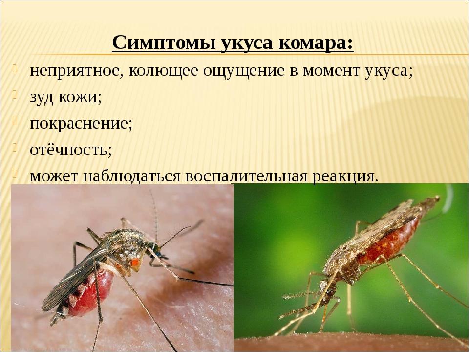 Симптомы укуса комара: неприятное, колющее ощущение в момент укуса; зуд кожи;...