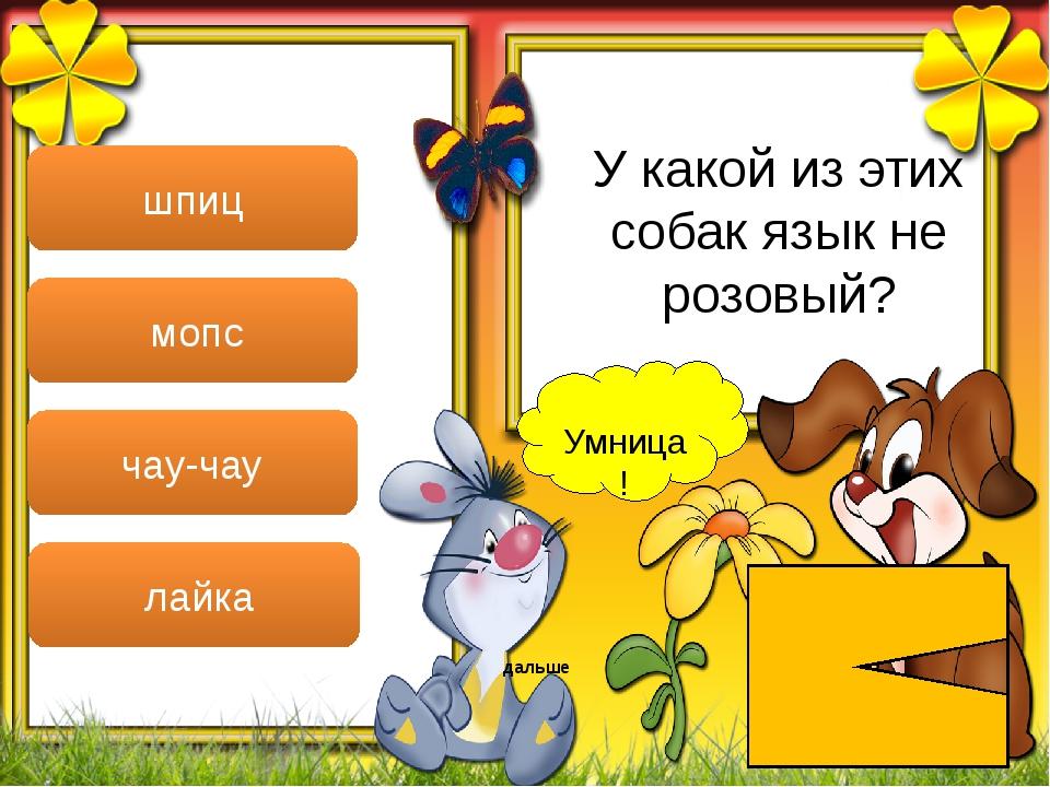 Умница! дальше шпиц мопс чау-чау лайка У какой из этих собак язык не розовый?