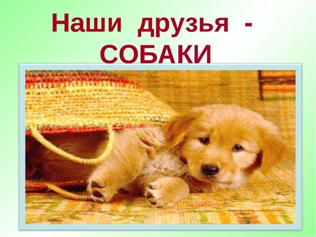 Наши друзья - СОБАКИ