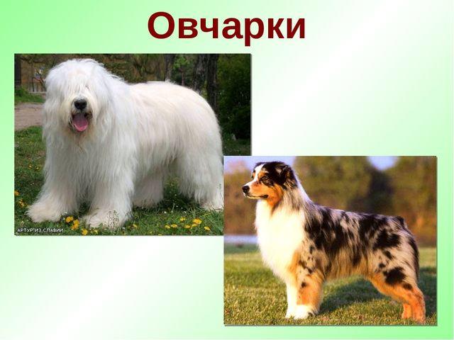 Овчарки