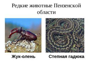 Редкие животные Пензенской области Жук-олень Степная гадюка